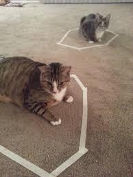 Cat Trap Meme - the internet comes full cat circle with cat circles