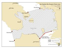 Tomales Bay Map Bay Area Sturgeon Closure Map The Lost Anchovy