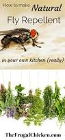 natural fly repellent you can make in your kitchen really