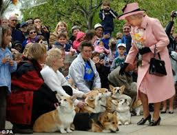 Queen Corgis Loveable Dulux Dog And The Queen U0027s Corgis Are Named On Endangered