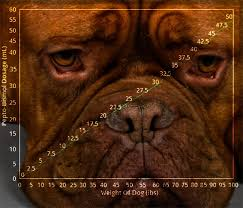 boxer dog upset stomach dog upset stomach cure tips for curing a dog u0027s upset stomach quickly