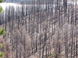Wildfire Northern Colorado by The Aftermath Of Fire Colorado Springs There And Back Again