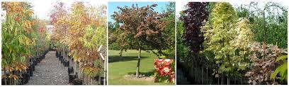 trees blueskin nurseries