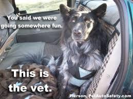 Dog At Vet Meme - new funny dog memes american dog blog