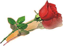 Mawar Yang Indah