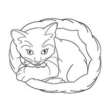 cat coloring pages images 20 free printable cat coloring pages for kids