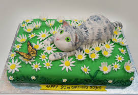 butterfly cake ronna s cat and butterfly cake