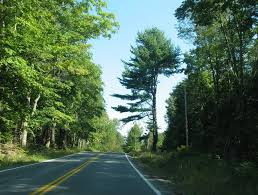 panoramio photo of one sided tree on mountain road