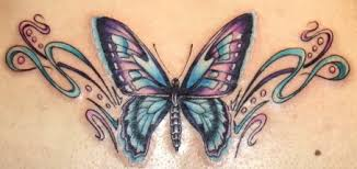 best colored butterfly