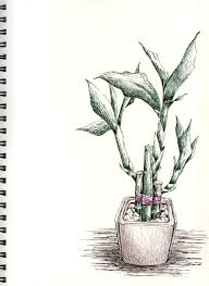 sbwatercolors and sketching lucky bamboo pen and ink plus