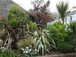 native plants new zealand resources u2014 ulster new zealand trust at the ballance house