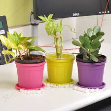 plants for office desk buy lucky money attracting feng shui table top office desk