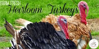 farm fresh heirloom turkeys for thanksgiving lake county