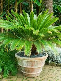 Tropical Plants For Garden - tropical style garden hgtv