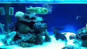 my sharks and home aquarium feeding time youtube
