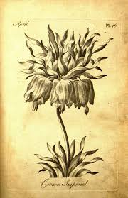 an 18th century botanical coloring book for adults