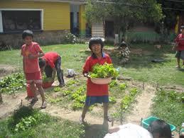 Urban Veggie Garden - planning an urban vegetable garden interior u0026 exterior doors