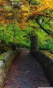 beautiful autumn cover photo 4k hd desktop wallpaper for 4k