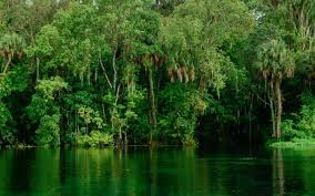 Florida forest images These 10 genuinely haunted forests in florida will terrify you jpg