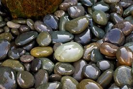 pebbles backyard macro