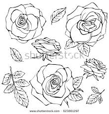 rose sketch stock images royalty free images u0026 vectors shutterstock