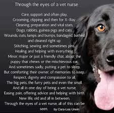 Vet Memes - vet nurse memes home facebook