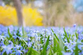 selective focus of lavender petal flowers free stock photo