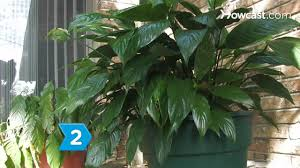 how to detox your house with plants youtube
