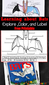 learning about bats explore color and label free printable