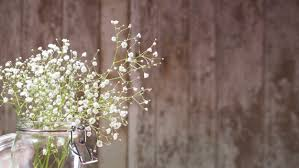 small white flowers small white flowers on wooden background photo free