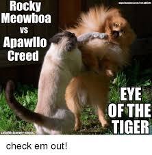Eye Of The Tiger Meme - rocky meowboa vs apawllo creed wwwfacebookcomcataddicts eye of the