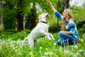 how to celebrate earth day with your pets animal wellness magazine