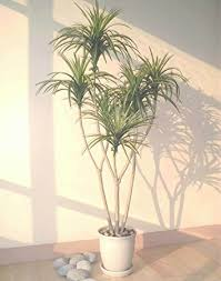 4 5ft yucca palm artificial tree without pot home