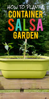how to plant a container salsa garden wholefully