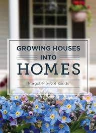 forget me not seed packets growing houses into homes forget me not seed packet bentley seeds