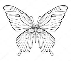 graphic black and white butterfly hand drawn contour lines and