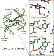 structure of the holliday junction applications beyond