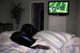 pillow for watching tv in bed do you allow your dog on the bed we did then didn t now we