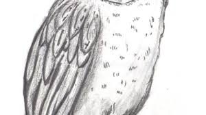 a drawing of an owl owl drawings barn owl sketch by topendi