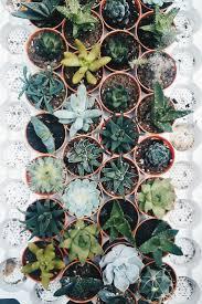 73 best succulents images on pinterest plants succulents garden