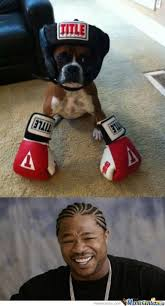 Funny Boxing Memes - my boxer is a boxer by enacional meme center