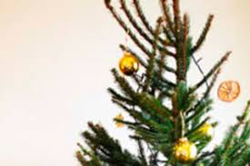 christmas tree recycling yard waste less is more