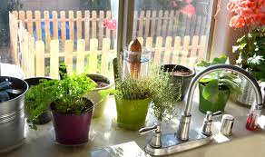 Easy To Care For Indoor Plants Best Kitchen Plants Plants For Kitchen To Decorate It Balcony