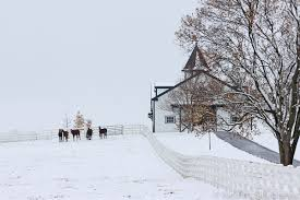 dixiana thoroughbred horse farm covered in snow in the heart