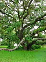 plantation oak jekyll island ga places i d like to go or