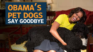 the obama s bo and sunny the obama dogs say goodbye to the white house youtube