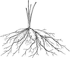 drawing a house 1 clipart etc plant roots drawing at getdrawings com free for personal use plant