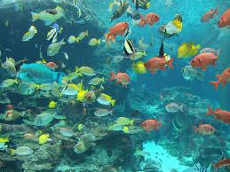 types of aquarium types of aquarium fish