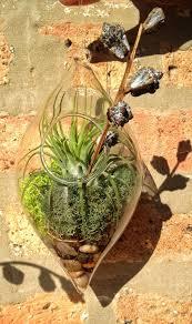 65 best terrariums i love images on pinterest terrariums