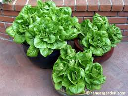 diy projects and ideas for the home gardens veggies and